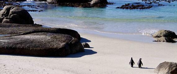 boulders beach